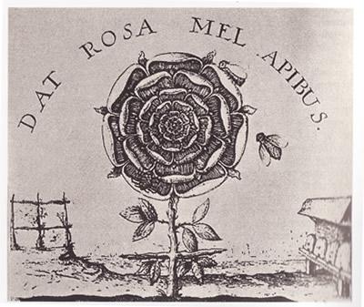 rosa paracelso